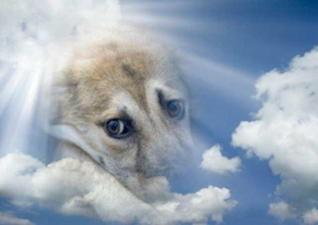 Пёс, дёрнул, словно поперхнулся, горлом и выдавил из себя: «Га-а-в…», потом откинул голову на землю и вытянувшись всем телом, затих…