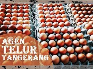 agen telur Tangerang