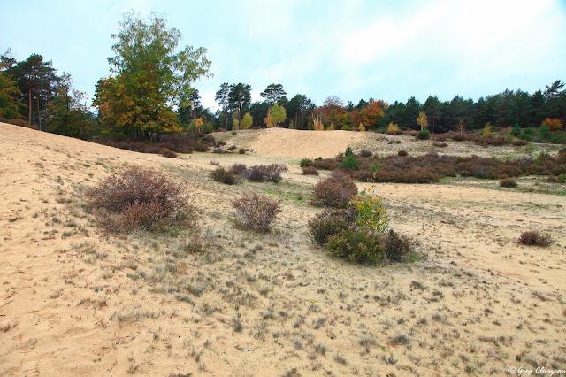 Les dunes de sable des Béorlots