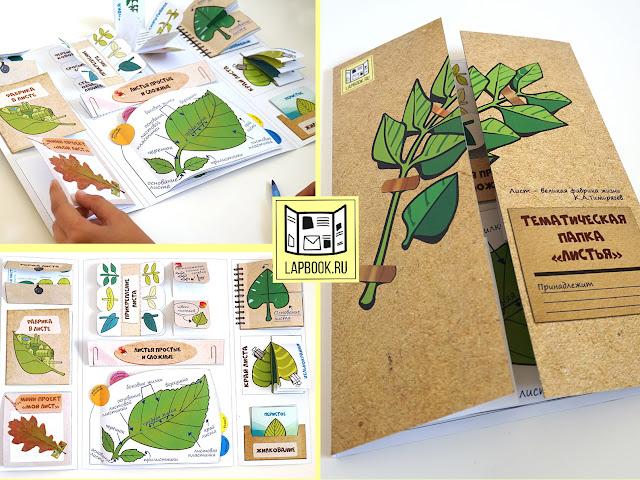 файлы для лэпбука о листьях