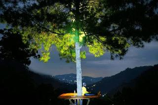 Hutan pinus kita pacitan indah di malam hari