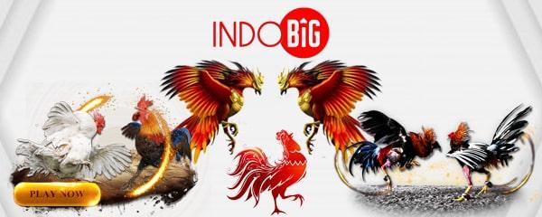 IndoBIG: situs sabung ayam online, daftar agen judi S128 & SV388 terpercaya & resmi di Indonesia beserta link alternatif bandar sabung ayam.