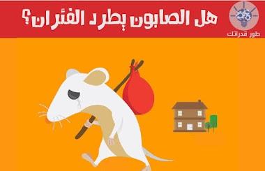هل الصابون يطرد الفئران؟