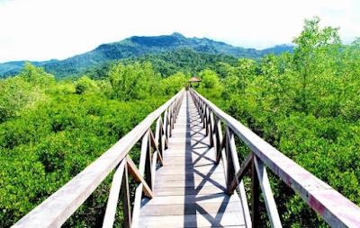 Hutan Manggrove