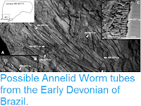http://sciencythoughts.blogspot.co.uk/2016/01/possible-annelid-worm-tubes-from-early.html