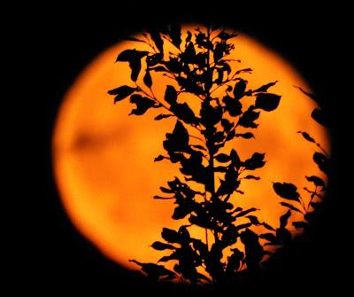 Täysikuu, kuutamo, syyskuu