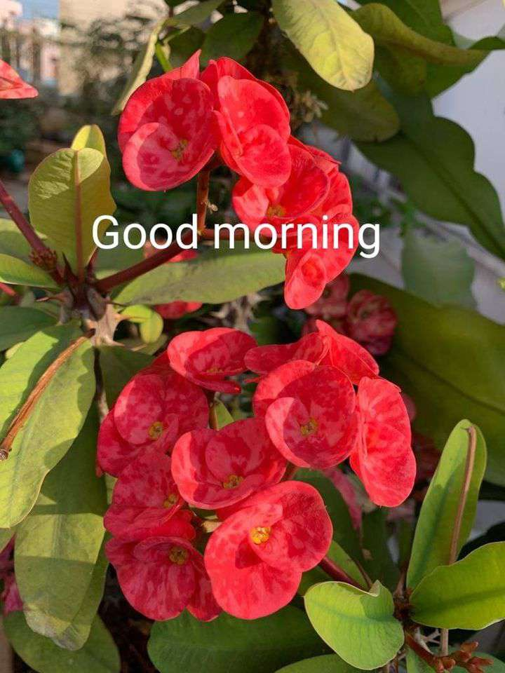 Good Morning Wishes Sweet Images