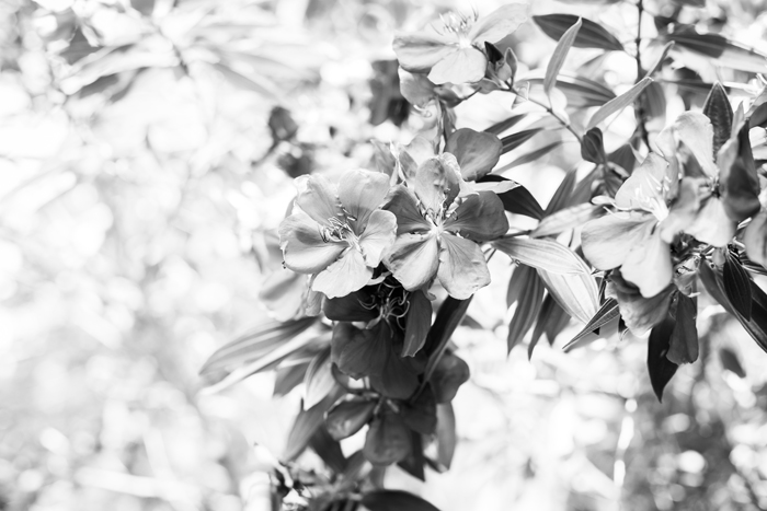 b&w flower photography