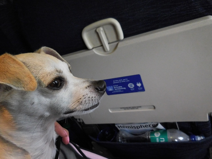 Dog In-Cabin on United Airlines International Flight Review