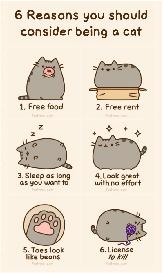 why you should consider being a cat