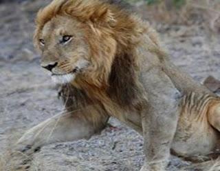 सपने में शेर देखना | sapne mein sher dekhna