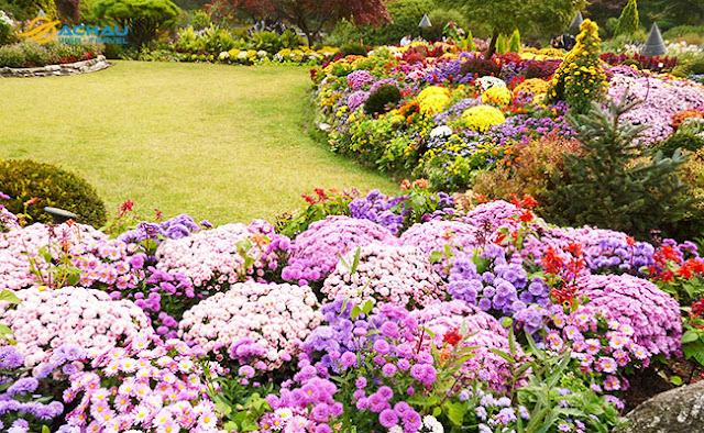 Lễ hội hoa xuân ở Hàn Quốc