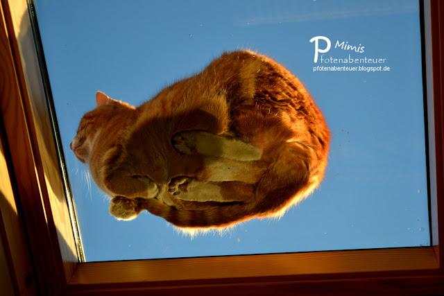 Katze Mimi sitzt auf dem Dach