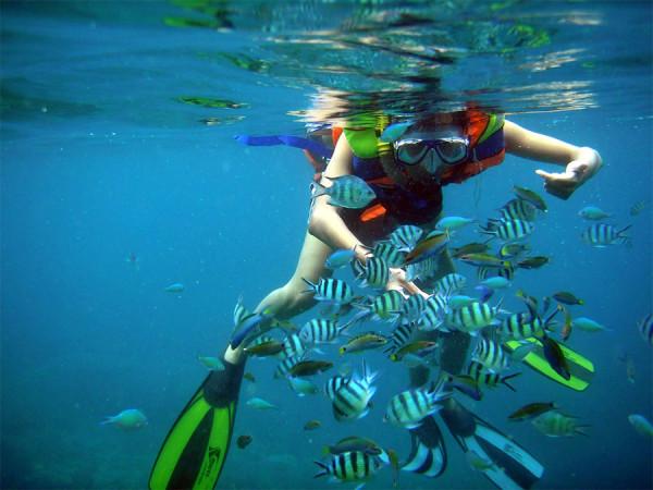 Snorkel di Karimunjawa