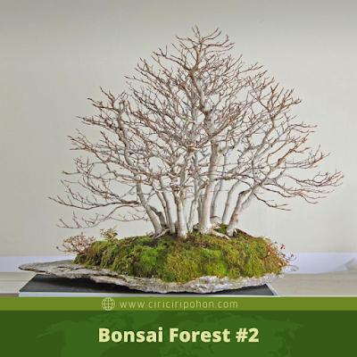 Bonsai Forest #2