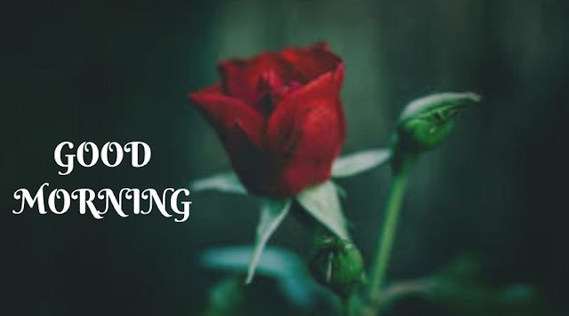 good morning images with red rose and heart