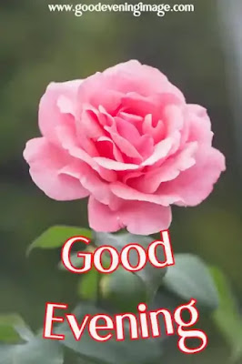 Good evening flowers pictures