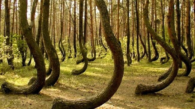 the-hoia-baciu-forest-most-horror-places