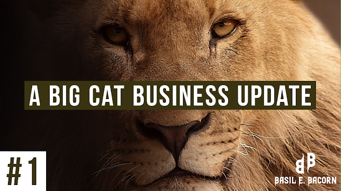 A Big Cat Business Update #1