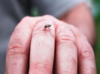 البعوض,البعوض في القران,البعوضة وما فوقها,البعوضة تحت المجهر,البعوض بالانجليزي,البعوض في المنام,البعوض الاسود,البعوضة,البعوض الكبير,البعوض النمر,البعوض تحت المجهر,البعوض يتميز بأجزاء فم من النوع,البعوض النمري,البعوضة فما فوقها,البعوض المعدل وراثيا