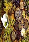Conheça 11 Plantas que Curam