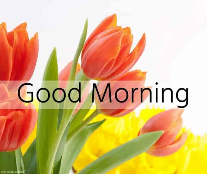lovely good morning wishes with flowers