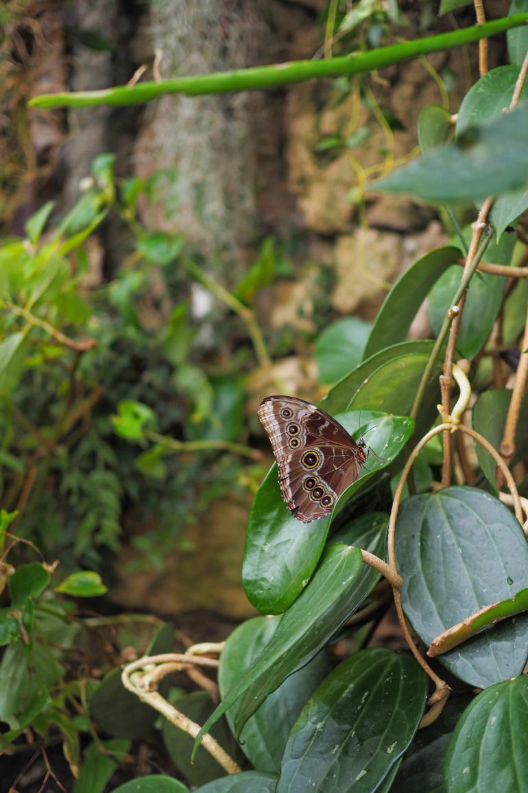 Serre aux papillons du jardin botanique, Botanisk Have, à Copenhague