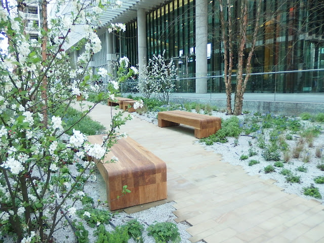 Striking trees and benches at Paddington Central