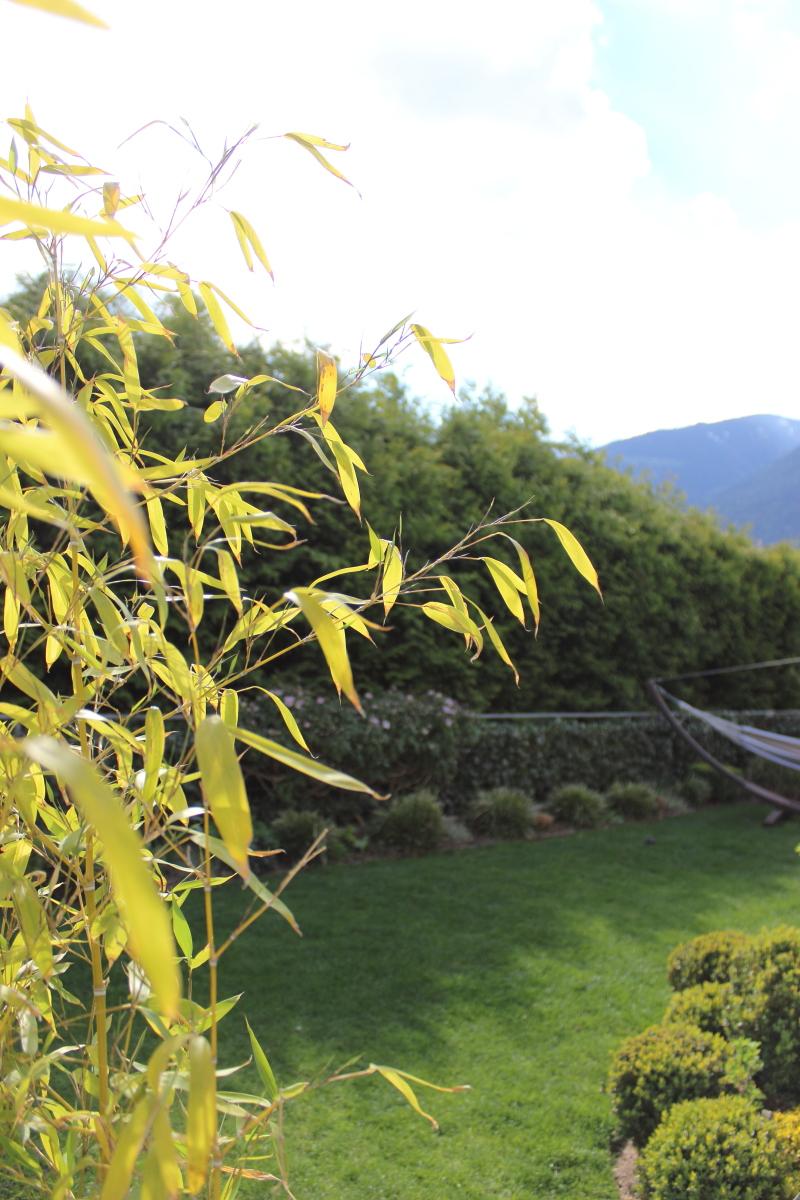 Garten im April bei kebo homing, Bambus im Garten, Rasenpflege im Frühling, Gräserbeete, moderner Garten