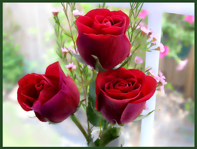 Romantic Red Rose Images For Valentines Day