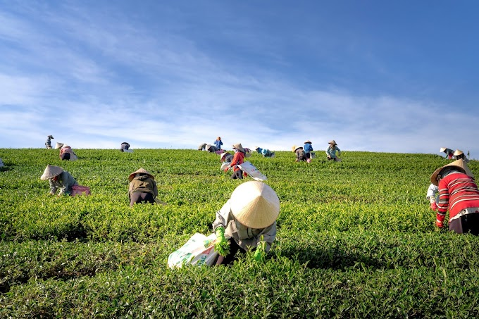 Laporan Praktikum Ekonomi Pertanian