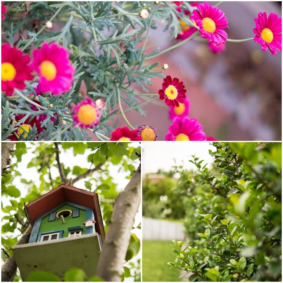 Blog + Fotografie by it's me | fim.works | Ein Garten im Norden | Collage aus pinken Margeriten, Nistkasten-Vogelhaus und immergrüner Hecke