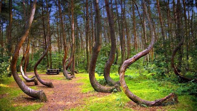 Warped Forest, Poland -RictasBlog
