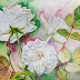 White Roses in the Garden