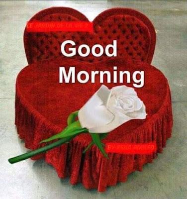 love heart flower good morning whatsapp