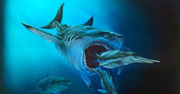 Bu büyük köpek balığı 2,5 milyon yıl önce tropik sularda terör estiriyordu.