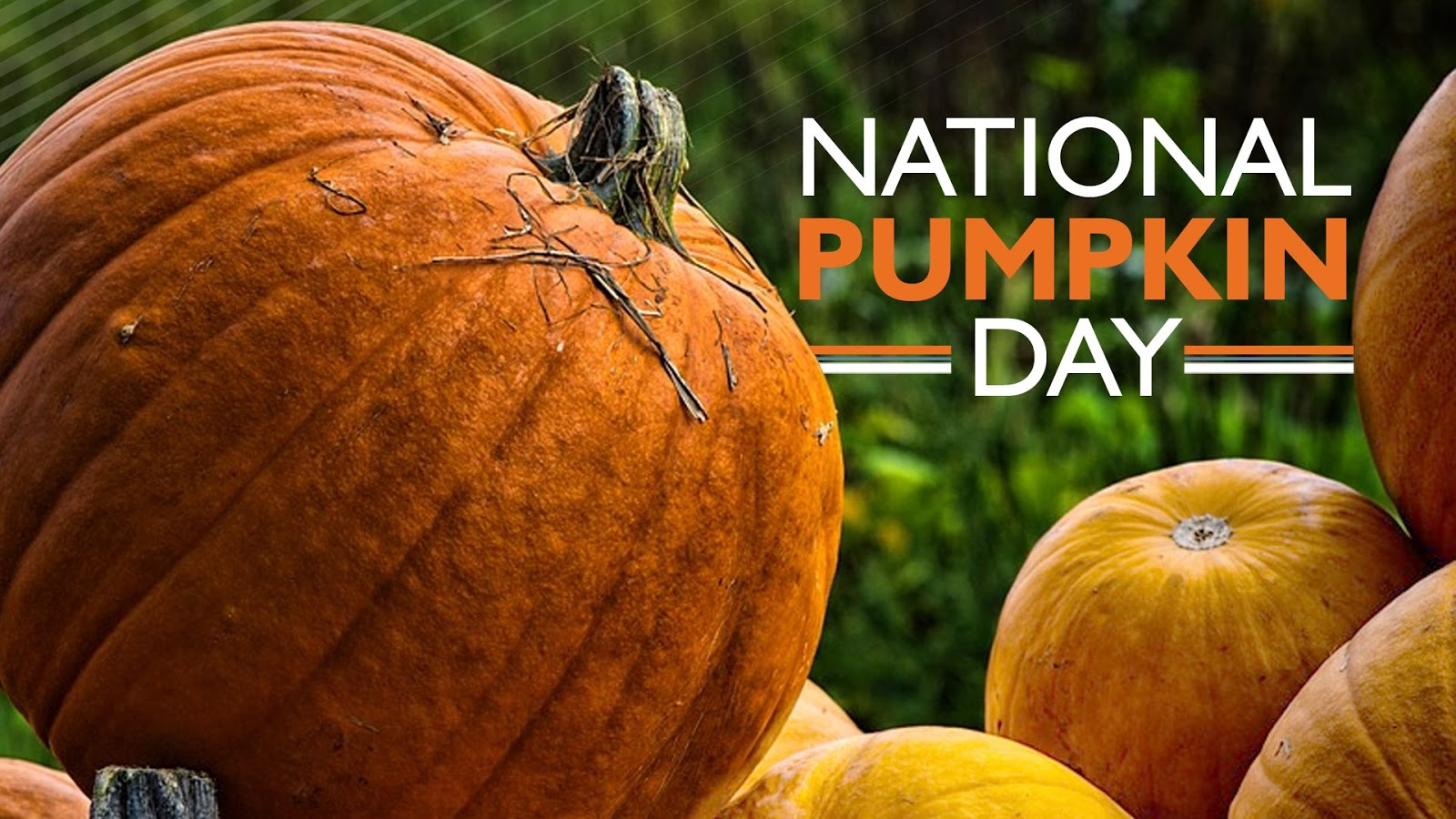 National Pumpkin Day Wishes for Instagram