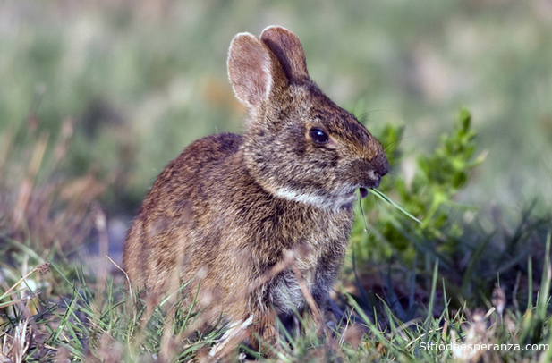 Reflexión del conejo