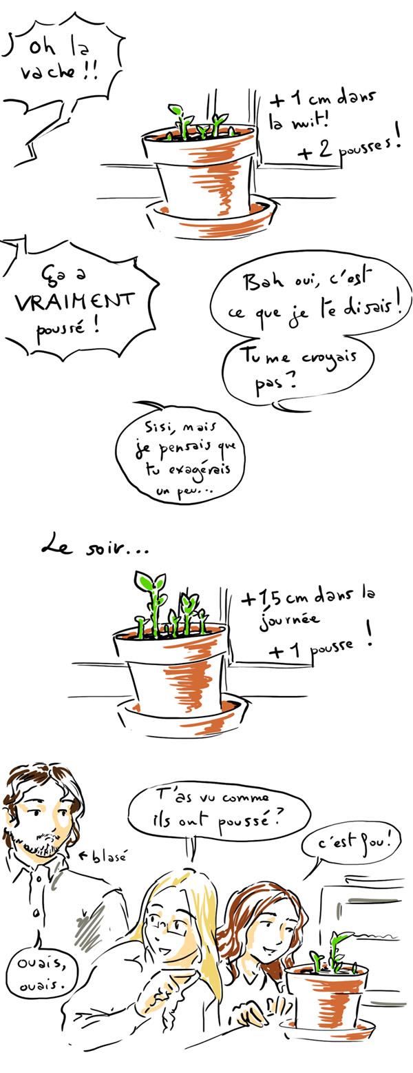 la croissance de Monsieur Patate