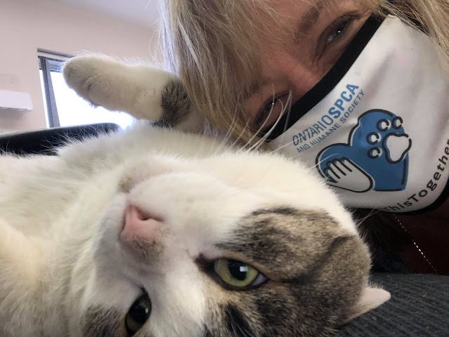 Helping holiday paws: Support local businesses and animals in need during the COVID-19 pandemic