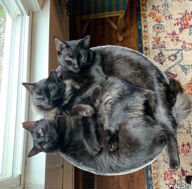 9. 3 black cats in a pot.