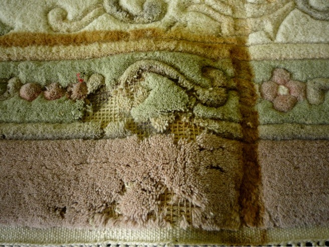 Area Rug Cleaning Specialists Victoria Bc Alert Moths