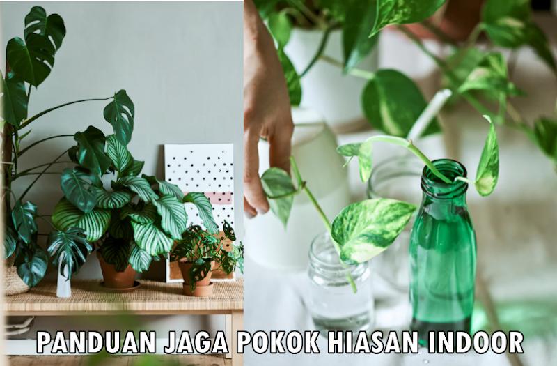 Tips Cara Penjagaan Pokok Indoor Sihat Membesar (Panduan Lengkap)