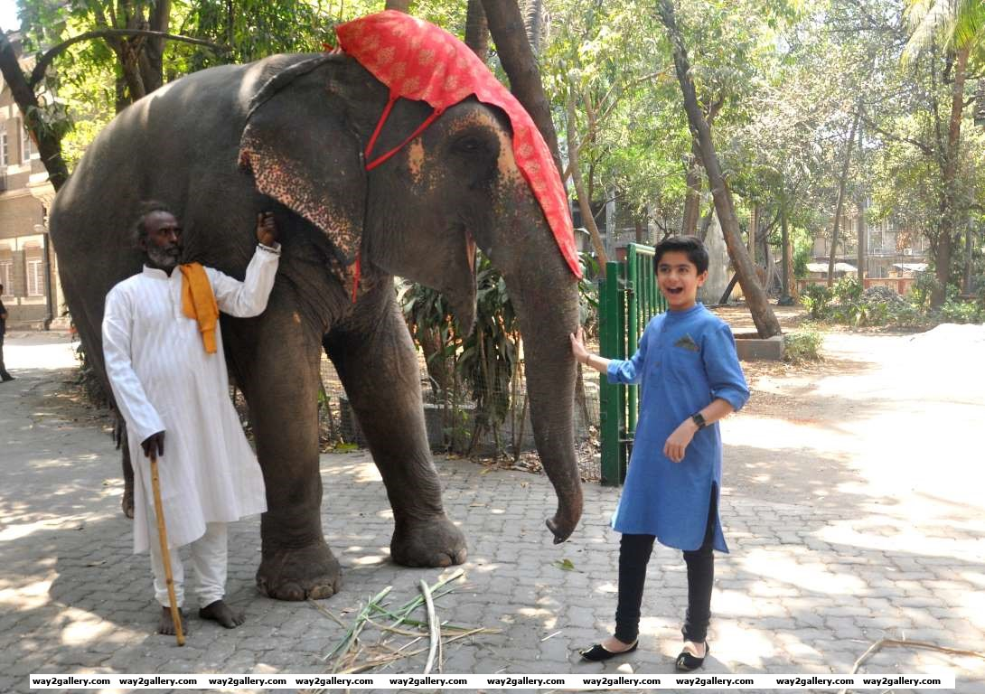 Neel Sethi poses with an elephant during a promotional event for The Jungle Book