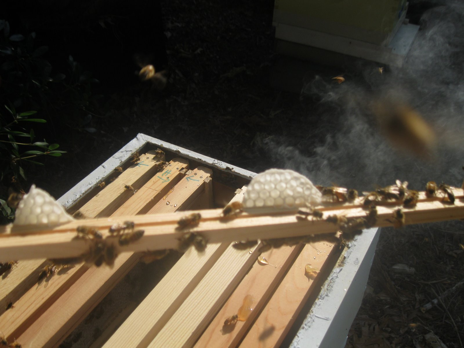 Linda's Bees: Foundationless Frames Need a Ladder!