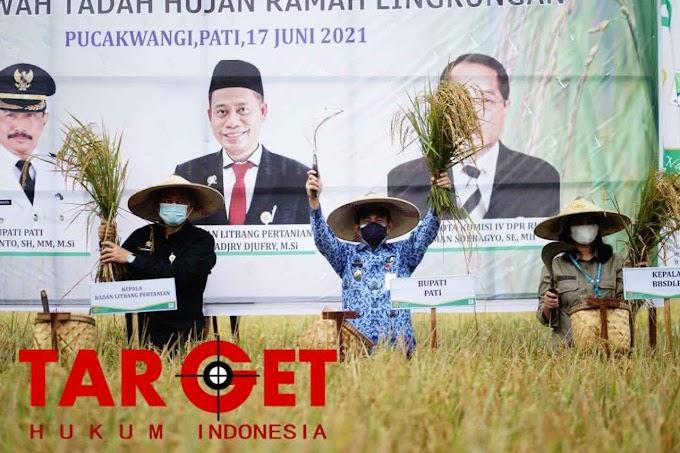 Bupati Pati - Balingtan Panen Demfarm Padi Sawah Tadah Hujan Ramah Lingkungan
