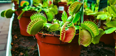 venus-fly-trap-terrarium-diy