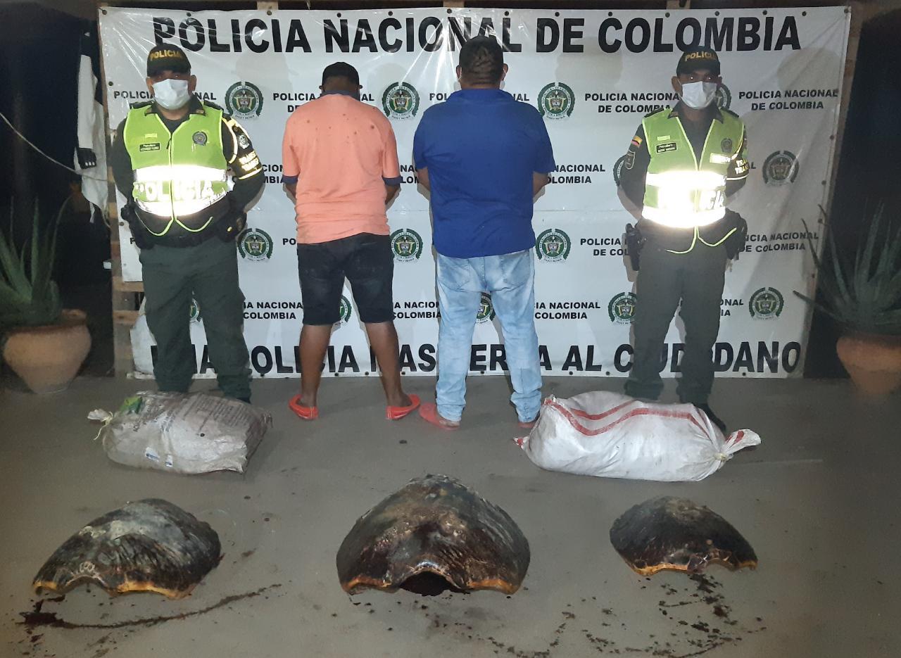 hoyennoticia.com, Incautan 250 kilos de carne de tortuga; tres detenidos