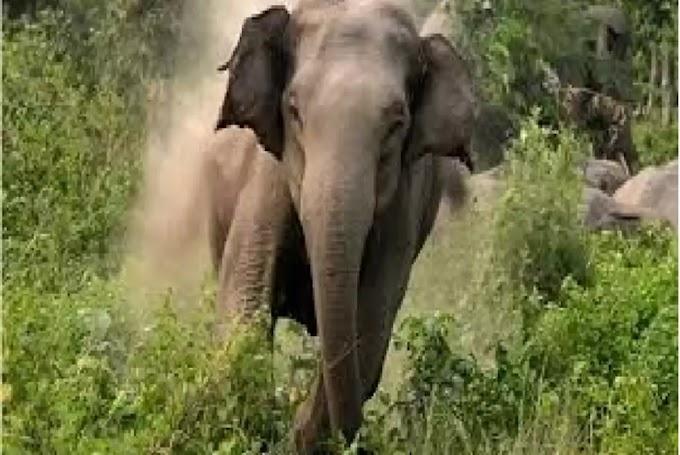 फूल लेने जाते समय हाथी ने बूढ़ी को रौंद दिया..