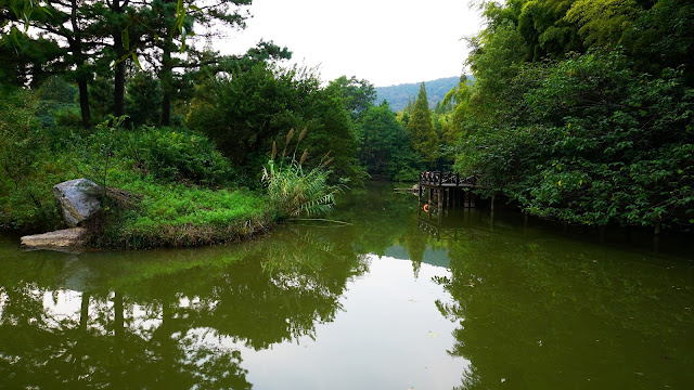 Photography: River in the Jungle